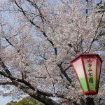 比治山公園(広島)2017桜の見頃はいつ?駐車場や見どころスポットも!